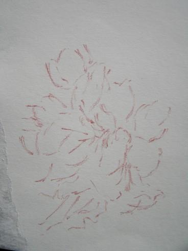 sanguine on paper, 110 x 130 mm, 2014