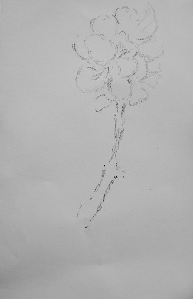graphite on paper, 130 x  200 mm, 2014